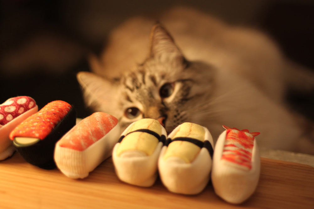 What happens when you get sushi socks to go? You get a confused cat.